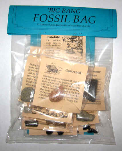 Fossil Bag Collection Kit